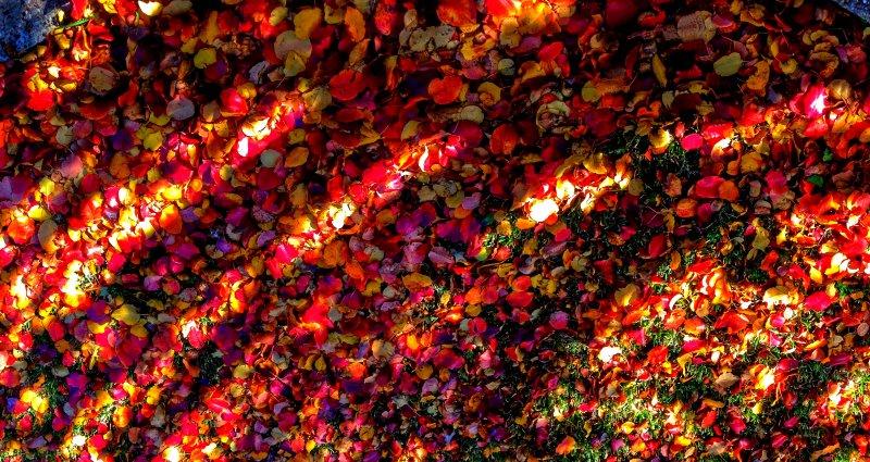 Austin-Fall-2014