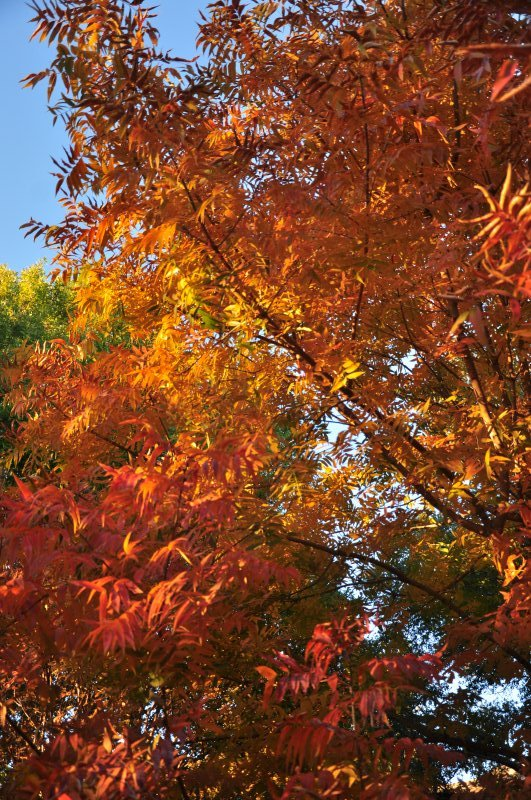Austin-Fall-Colors4