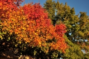 Austin-Fall-Colors6