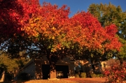 Austin-Fall-Colors8