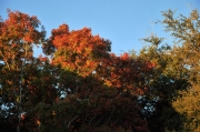 Austin-Fall-Colors9