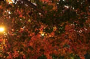 Austin-Fall-Colors12